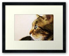 """""""Finding beauty: Max"""" #cat #cats #animal #animals #pet #pets #love #adore #awesome #shot #photo #photography #camera #purr design for women, men and kids apparel, stationery, housewares, cases, skins and more! Take a look here: http://www.redbubble.com/people/matildedeschain/works/19888712-finding-beauty-max"""