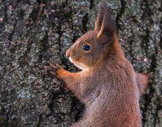 Photo A squirrel photosession par Boligolov Andrew on 500px