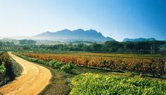 No visit to the Western Cape Winelands would be complete without a wine tasting at Beyerskloof wine estate, the Stellenbosch-based farm that's become synonymous with Pinotage, the one true South African cultivar. Wine Country, Country Roads, South African Wine, Wine Tourism, Cape Town South Africa, Landscape Art, Vacation Spots, Beautiful Places, Amazing Places