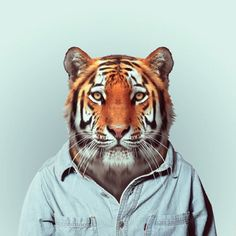 Zoo Animals (montage photographique) - Yago Partal (graphiste)