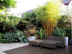 Garden Design by Post: a Modern Tropical Garden in Devon - Metarnews Sites Tropical Plants Uk, Small Tropical Gardens, Tropical Patio, Tropical Garden Design, Back Garden Design, Modern Garden Design, Modern Tropical, Backyard Garden Design, Tropical Landscaping