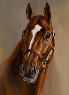 Curlin my favorite race horse of all time, from the moment I first saw him run!! What a heart,