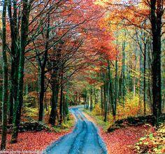 Country road (Skåne, Sweden)