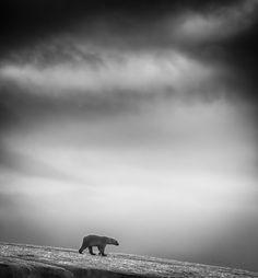 Categoría #viajes: Es parte de una serie de imágenes del autor en blanco y negro tomadas en #Svalbard