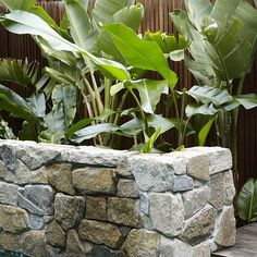 Loving these Strelitzia from exoticnurseries we installed behind this pool Landscape Design, Garden Design, Coastal Gardens, Backyard Pools, Closer To Nature, Plant Needs, Recycled Wood, Natural Stones, Butterflies