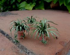 Dollhouse spider plant how-to | Source: Pequenas cosas