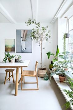 Wooden furniture & greenery