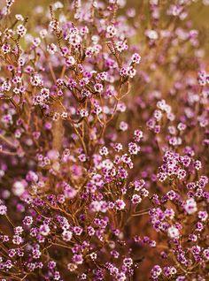 Road Trip - Native Flora - Uluru - The Northern Territory - Australia - Photography by Kara Rosenlund