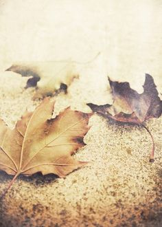 Autumn leaves, Rustic fall photography, Autumn Decor, Harvest, Earth Tones, Nature Photo, Thanksgiving - Simple Wishes. $15.00, via Etsy.
