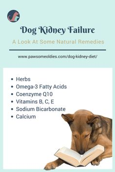 Dog kidney diet should be low in phosphorus, and should have moderate amounts of high-quality animal proteins. What food ingredients, remedies, and supplements are good for dogs with kidney failure? Check this page to find out. Kidney Recipes, Dog Food Recipes, Food Tips, Natural Home Remedies, Natural Healing, Holistic Remedies, Kidney Diet For Dogs, Dog Kidney Failure Diet, Dog Kidney Disease Diet
