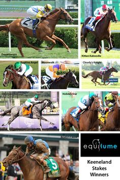 Brody's Cause - Race 10 at Keeneland 2016, Dayatthespa - Queen Elizabeth II Challenge Cup 2012, Informed Decision - Raven Run Stakes Winner 2008, Fugitive Angel - Valley View Stakes 2010, Kitten Kaboodle - Jessamine Stakes 2013, Moonwalk - Jessamine Stakes 2012, Cloudy's Knight - Sycamore Stakes 2009, Holiday Star - Sycamore Stakes 2014 and 2015   Keeneland Stakes winners, thoroughbred horse, Thoroughbred racing, racehorse