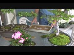▶ Growing Moss for Bonsai - YouTube