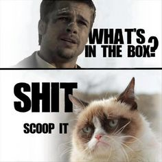 Funny pictures about Brad Pitt gets a response. Oh, and cool pics about Brad Pitt gets a response. Also, Brad Pitt gets a response. Grumpy Cat Meme, Funny Cat Memes, Grumpy Kitty, Kitty Cats, Funny Humor, Cats Humor, Funny Captions, Funny Comedy, Brad Pitt