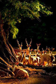 """Animal Life Twitter'da: """"Deer gathering in the night forest. What a beautiful photo! https://t.co/OlW5t63pzt"""""""