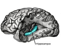 The hippocampus – a section of the brain responsible for long-term memory formation and learning – is highly active during exercise, which may help increase focus, learning, and thinking. WORK OUT! It might make you smarter...