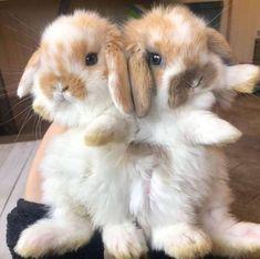 Cute Baby Bunnies, Baby Animals Super Cute, Funny Bunnies, Cute Little Animals, Cute Funny Animals, Cutest Animals, Cute Bunny Pictures, Baby Animals Pictures, Cute Animal Pictures