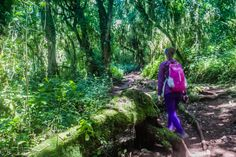 Trail hiking Mount Kilimanjaro Tanzania. Click to read the full travel blog post