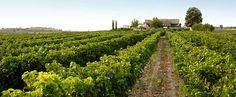 Ktima Gerovassiliou | Thessaloniki Prefecture | Vineyard Winery