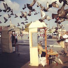 Istanbul birds