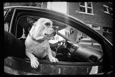 Trending Photos of February 2015 · Lomography Beautiful Babies, Animals Beautiful, Trending Photos, Lomography, February 2015, French Bulldog, Dogs, Cutest Animals, French Bulldog Shedding