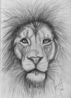 Amazing drawings · doodle drawings · lion by tania cute animal drawings, animal sketches, cute drawings, pencil drawings, Cute Animal Drawings, Animal Sketches, Art Sketches, Drawing Animals, Amazing Drawings, Easy Drawings, Watercolor Animals, Watercolor Art, Pencil Art