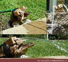 Blastoise used Hydro Pump!