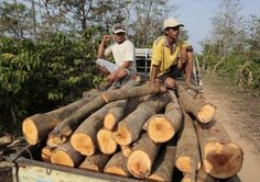 Mechanisms to ensure wood is legally sourced are essential to conserve forests, and can also help small businesses expand exports, thereby increasing incomes Sustainable Forestry, Forests, Geography, Small Businesses, Conservation, Craftsman, Wood, Artisan, Small Business Resources