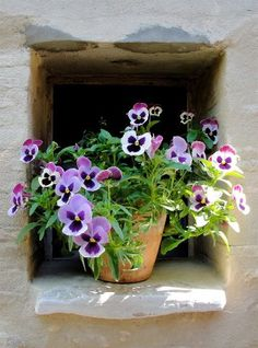 1023 Best Windows With Flowers Images In 2018 Window