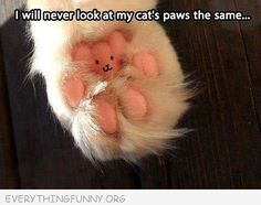 funny caption will never look at my cats paw the same way again little teddy bear