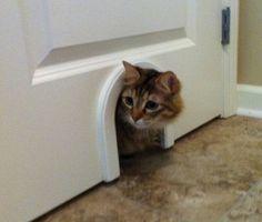 Kathryn Cat Door