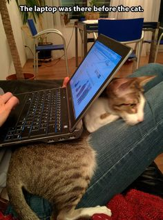 Cat vs. laptop…