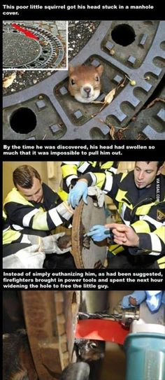 Squirrel rescued from manhole cover. Faith in humanity restored; the true showing of character is when you take the time to help someone, or something, who can do nothing for you. Funny Animals, Cute Animals, Amor Animal, Faith In Humanity Restored, Hamsters, Good People, Amazing People, Beautiful People, In This World