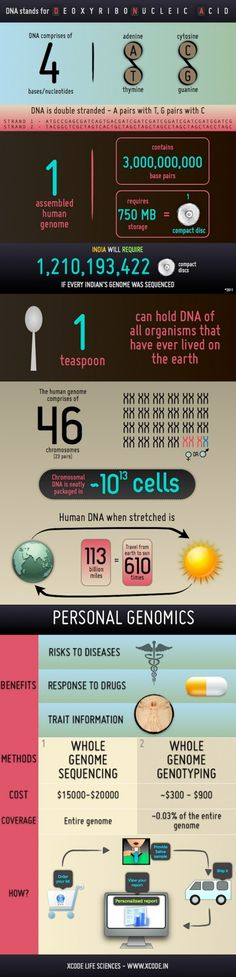 A graphic on DNA (Deoxyribonucleic Acid), human genome and personal genomics. Teaching Science, Science Education, Life Science, Science News, Human Dna, Human Genome, Molecular Biology, Ap Biology, Biology Lessons