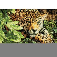 Dimensions Gold Collection Leopard in Repose Counted Cross Stitch Kit for sale online Counted Cross Stitch Patterns, Cross Stitch Designs, Dimensions Cross Stitch, Needlework Shops, Free Digital Scrapbooking, Paint By Number Kits, Canvas Wall Decor, Cross Stitching, Art Prints