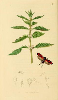 1840 - v. 7 - British entomology; - Biodiversity Heritage Library