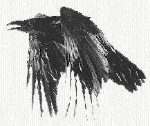 crow tattoo design tattoo pinterest dr who tattoo ideas and thigh tattoos. Black Bedroom Furniture Sets. Home Design Ideas