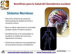 Beneficios del Ganoderma Lucidum en la Salud Ayurveda, Health, Medicine, Cherry Tree, Healthy Drinks, Healthy Life, Wellness, Beauty, Recipes