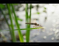 Dragonfly with morning #insect #insectphotography #insects_of_our_world #dragonfly #dragonflyphotography #nature #naturephotography #wildlifephotography #outdoorphotography #water #bokeh #brown #macro #macrophotography #macroworld #macrolovers #instanature