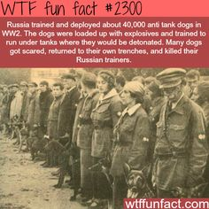 Russian Anti Tank Dogs Fun Facts