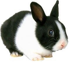 zwart wit foto 's van konijnen