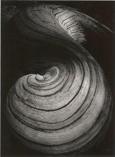 Racine de saule, 1969 par Jean Dieuzaide