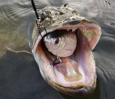 Fishing For Pike – Pike Fishing Baits, Tips and Tackle