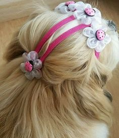 Dog Accesories, Pet Accessories, Large Dog Bowls, Dog Grooming Styles, Pet Guinea Pigs, Diy Dog Treats, Dog Grooming Business, Pet Paws, Pet Fashion