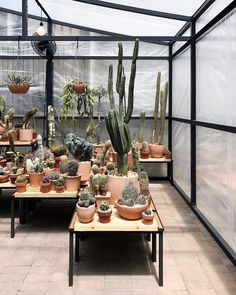 """7,077 Likes, 39 Comments - Eva Tsang (@thetrottergirl) on Instagram: """"Always adding to my cacti collection :)"""""""
