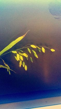 Panicum Northern Lights, Amazing, Places, Nature, Painting, Travel, Art, Voyage, Painting Art
