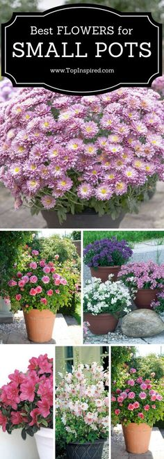 Best flowers for small pots!