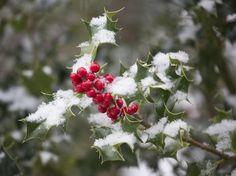 DECEMBER To do LIST: Regional Gardening Chores for December