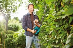 Well-groomed hedges without the hard work