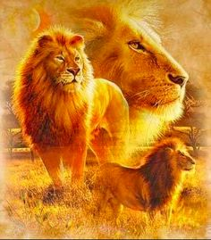 CLASE DOS: El justo está confiado como un León