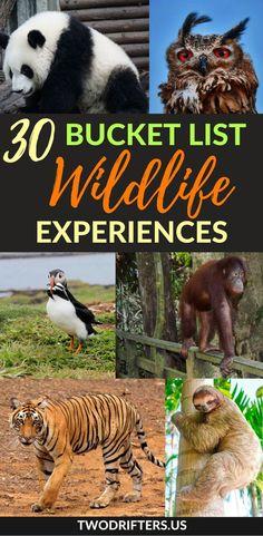 30 Bucket List Animal & Wildlife Experiences